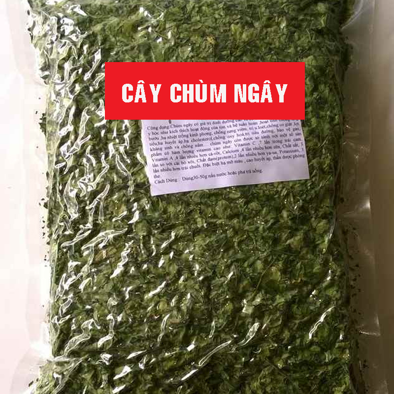 cay-chum-ngay-thao-duoc-nhieu-dinh-duong-thao-duoc-xanh-so-1-jindo.vn-3